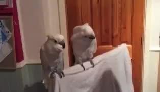 """cockatoo. .. """"Lemme smash"""" """"No ron"""""""
