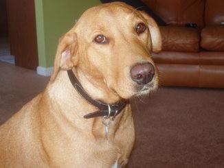 I lost my doggo a couple weeks ago. She made it...