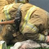 Firefighter revives lifeless Dog