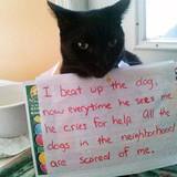 Pet Shaming Comp