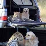 Companions :)