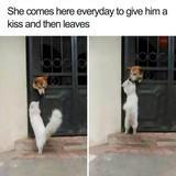 Wholesome dog dump