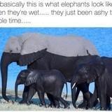 Elephants are black