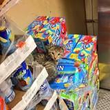 Store cat comp