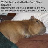 Good Sleep Capybara