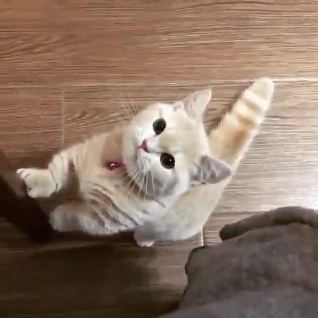 Palatschinken. .. Man how can a cat be so loud and yet so cute?