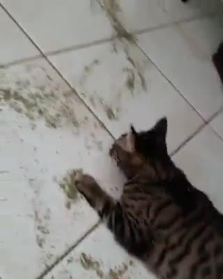 intense. .. Oh my gooooood, I gave my cat druuuugggss, oooooooh, making such a mess right noooooow, im so shooooooock oh my goooooooood buddy