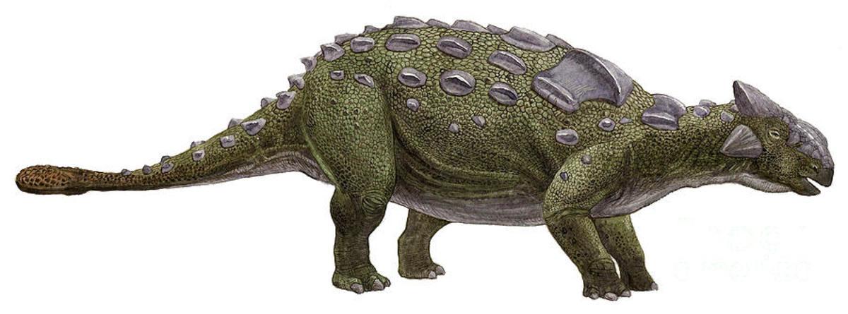 armored dino. Name: Ankylosaurus (Fused lizard). Phonetic: An-kie-lo-sore-us. Named By: Barnum Brown - 1908. Classification: Chordata, Reptilia, Din armored dino Name: Ankylosaurus (Fused lizard) Phonetic: An-kie-lo-sore-us Named By: Barnum Brown - 1908 Classification: Chordata  Reptilia Din