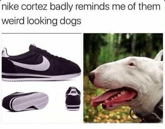 Madeis Nyocu Yscamat. .. They're good dogs, Brett. Madeis Nyocu Yscamat They're good dogs Brett