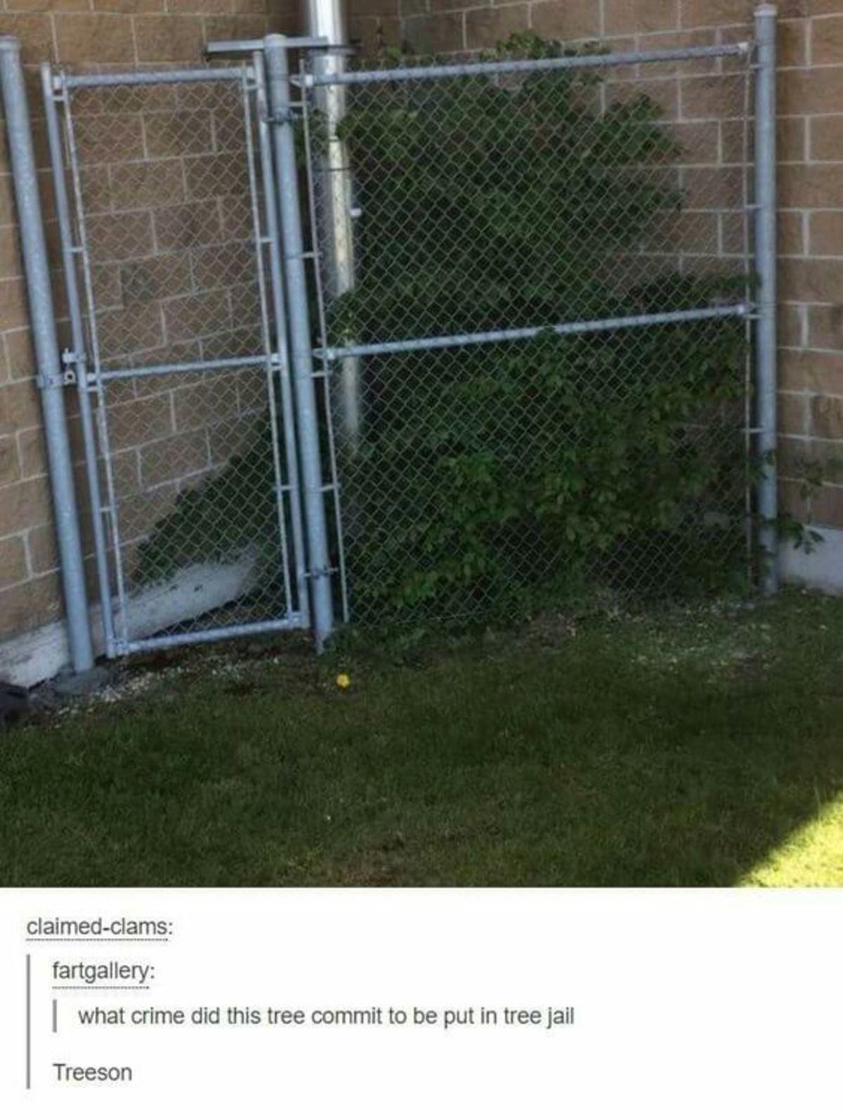 Tree jail. . Tree jail