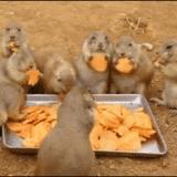 wassup cracker