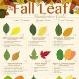 Fall. Fall fall fall. Fall. (Leaves.)