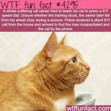 EMT Cat