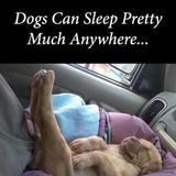Sleeping Doggos
